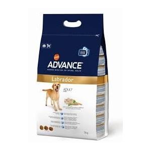 Advance Labrador Adult