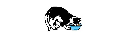 Alimentacion gatos